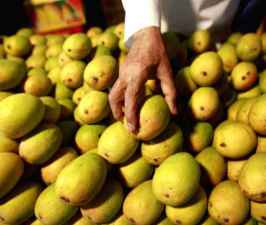 Indian citizen faces trial in Dubai for stealing mangoes.jpg