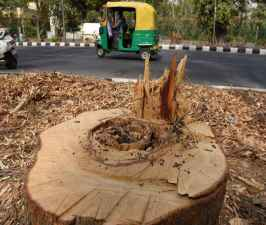 BJP government destroyed  6,51,403 trees in the last five years.jpg