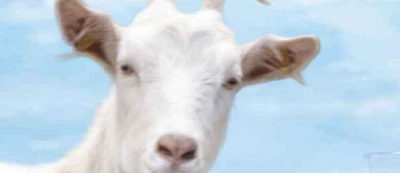 Health-Benefits-of-Goat-Milk.jpg