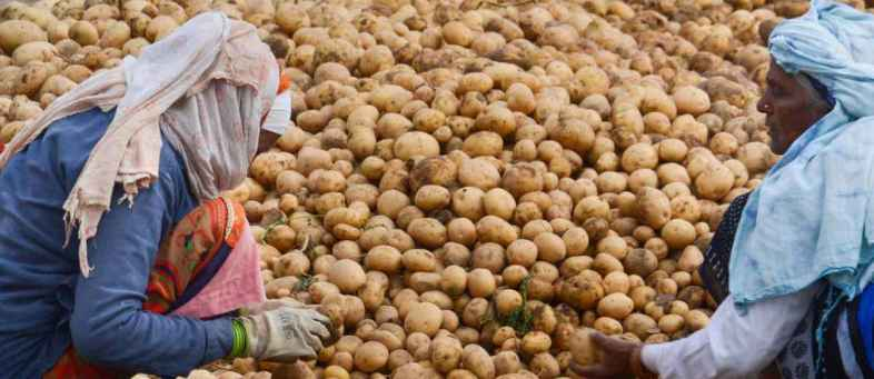 Potato prices crash 70 per cent from Novembers high level due to new arrivals.jpg