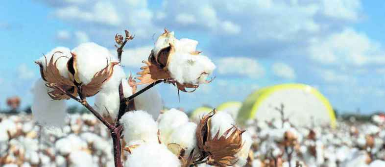 The recession in the cotton market will be strong in November.jpg