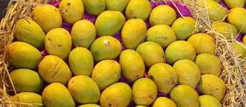 Mangoes worth crores of rupees were sold in Ahmedabad's 'Mango Bazaar' ....jpg
