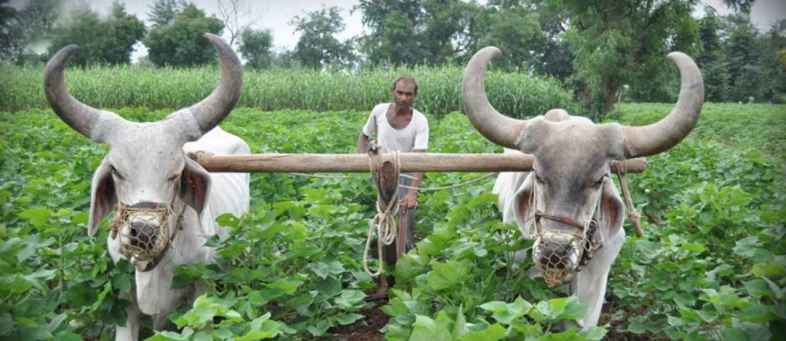 Gujarat's Farmers increased employment, Paid a salary of 6500 crores----.jpg