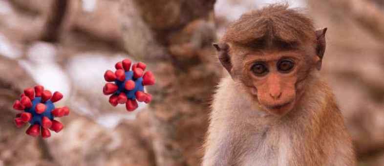 Monkey B Virus, Death, China,.jpg