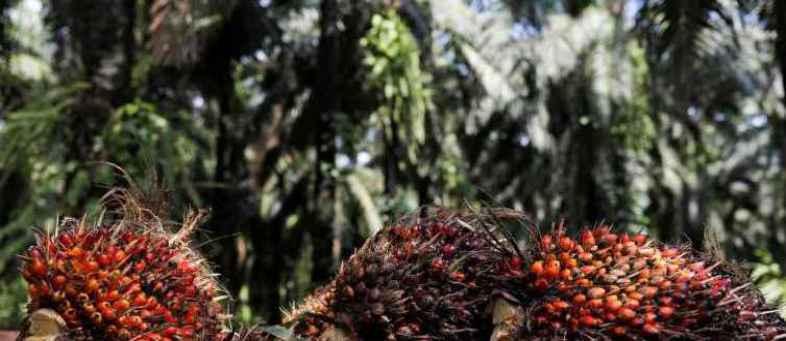 Palm-oil-770x433.jpg