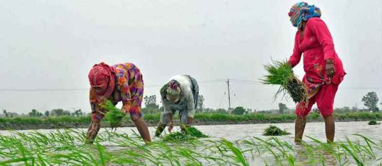 Kharif crop sowing touches 800 lakh hectares, up 19 per cent.jpg