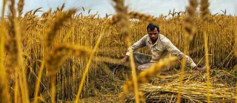 Kharif crops production likely to decline up to 53.3% due to erratic weather.jpg