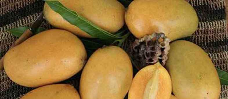 Mallika mango.jpg