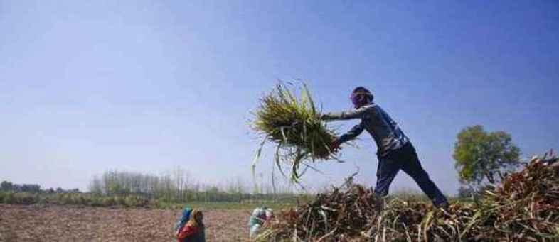 Crop Insurance Scam - Farmers In Preparation For The Digital Agitation.jpg
