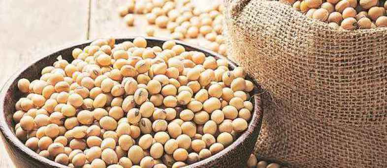 Soybean prices will rise before Diwali.jpg