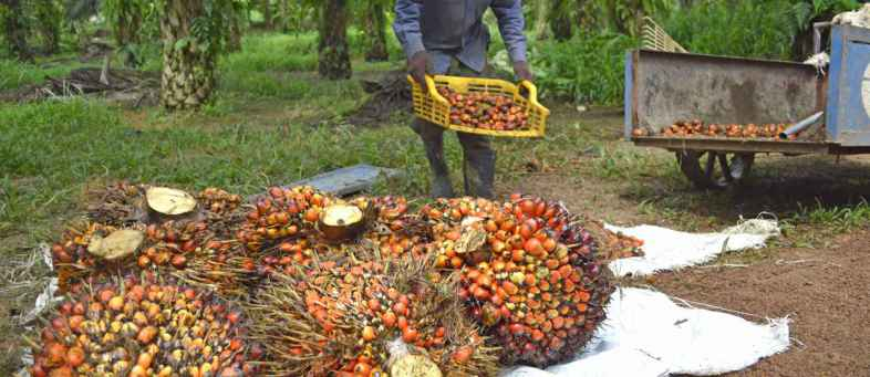 Palm oil price rise at five-month high in global markets.jpg