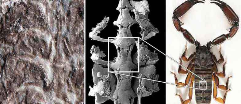 American scientists discovered the remains of the oldest scorpion.jpg
