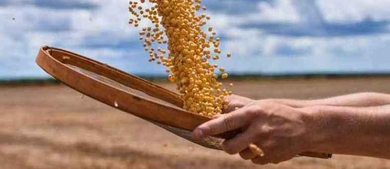Soybean 190924 Image.jpg