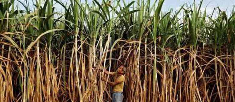 Centre raises ethanol prices for blending with petrol (1).jpg